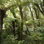 http://novzelandiya.ru/img/pages/Леса в Новой Зеландии (Буш)