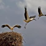 http://novzelandiya.ru/img/pages/Разнообразие птиц в Новой Зеландии