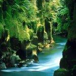 http://novzelandiya.ru/img/pages/Природа Новой Зеландии сегодня – все ли так плохо?