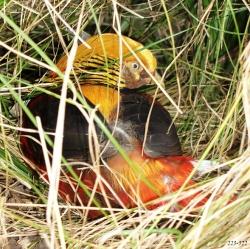 http://novzelandiya.ru/img/pages/Редкие птицы Новой Зеландии