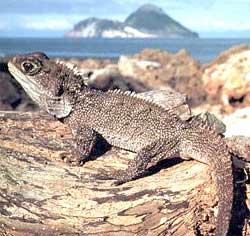 http://novzelandiya.ru/img/pages/Удивительная фауна Новой Зеландии