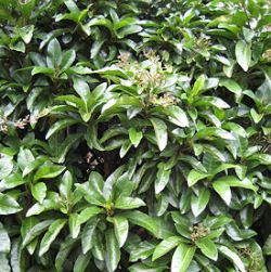 http://novzelandiya.ru/img/pages/Редкие растения Новой Зеландии
