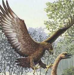 http://novzelandiya.ru/img/pages/Ископаемые животные – орел Хааста