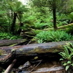 http://novzelandiya.ru/img/pages/Почвенный состав земель Новой Зеландии