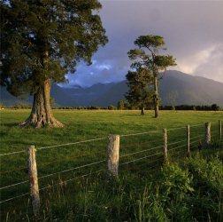 http://novzelandiya.ru/img/pages/Фантазии новозеландской природы
