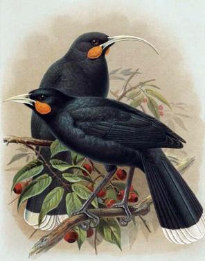 http://novzelandiya.ru/img/pages/Причины вымирания птиц в Новой Зеландии