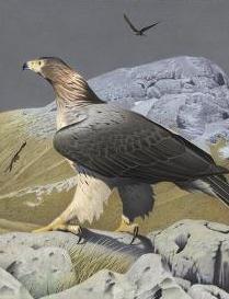 http://novzelandiya.ru/img/pages/Ископаемые  Новой Зеландии